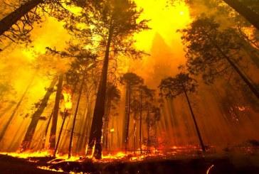 إعداد خريطة الأسـاس لحرائـق الغابات السـاحلية باسـتخدام تقنيـات الاستشـعار عن بعـد