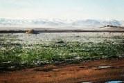 الدراسة البيئية لمحمية البطم الأطلسي في جبل أبو رجمين