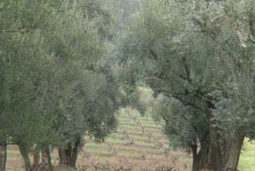 تصميم منهجية لإحصاء أشجار الزيتون باستخدام تقنيات الاستشعار عن بعد ونظام المعلومات الجغرافي بالتعاون مع المركز الوطني للاستشعار عن بعد في تونس