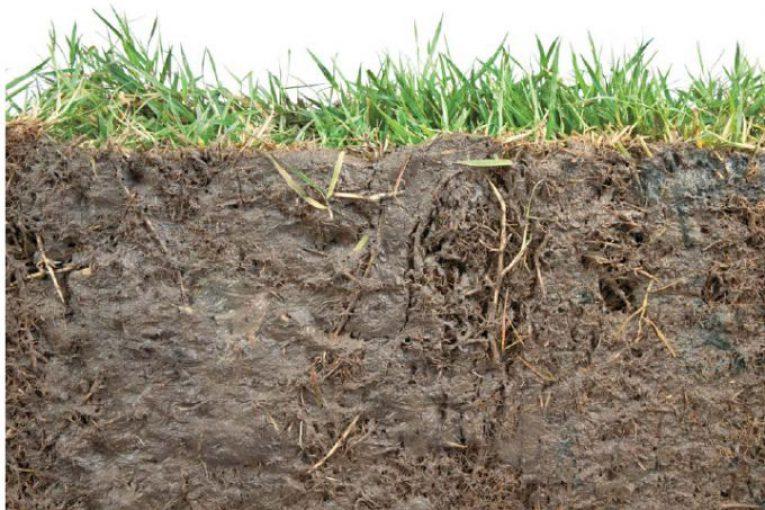 قوام التربة
